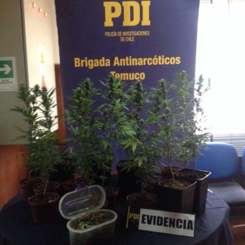 6 personas detenidas por tráfico de drogas en La Araucanía