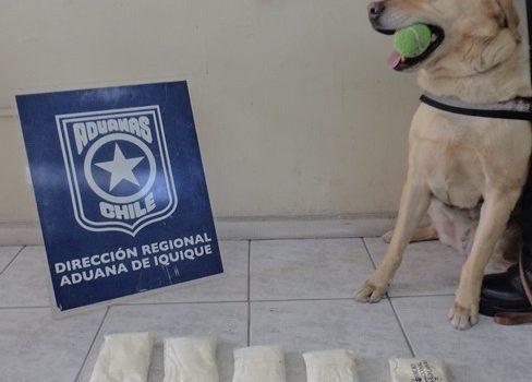 Can detector de drogas | Aduanas de Chile