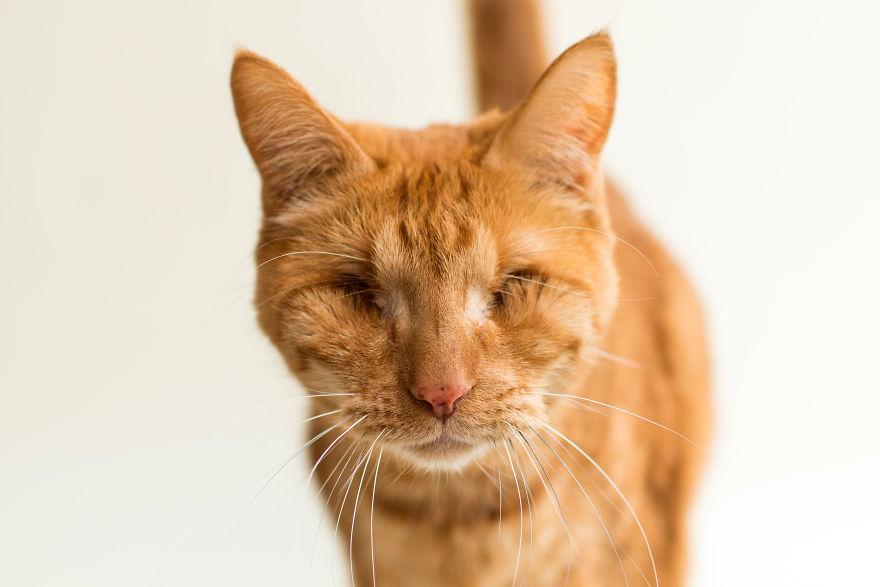 La belleza de los gatitos tuertos y ciegos es captada en tiernas fotografías