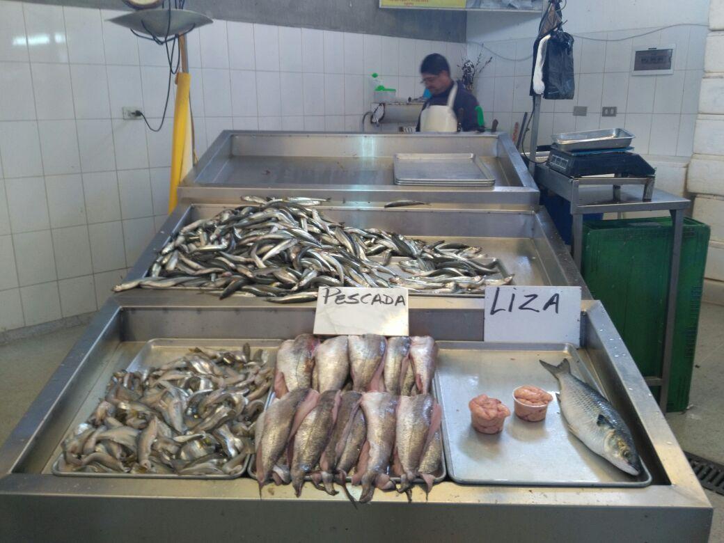 Merluza en Terminal Pesquero de Talcahuano
