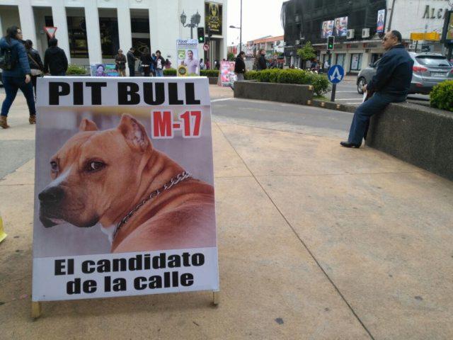 Los misteriosos candidatos que compiten por las elecciones en Los Ángeles