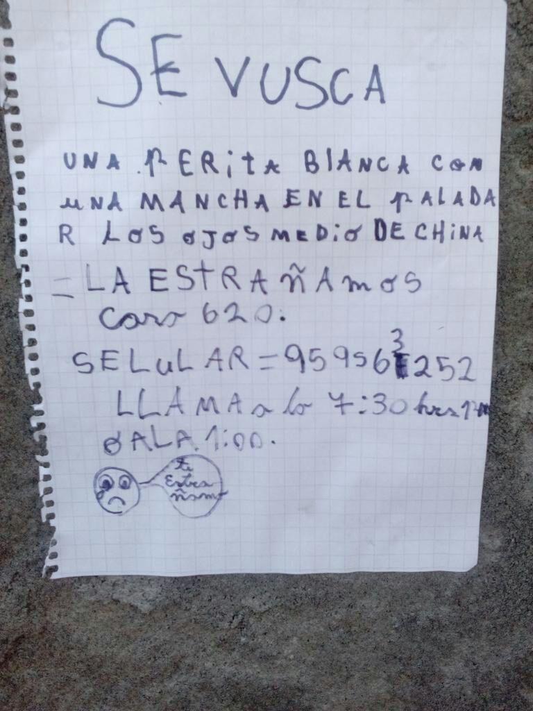 El tierno mensaje con el niña de Los Ángeles busca a su perrita extraviada