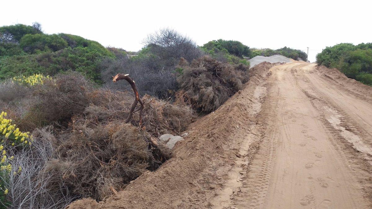 Destrucción de bosque protegido en dunas de Ritoque