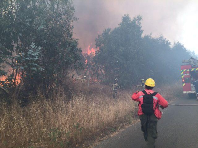 Controlan incendio forestal en San Antonio
