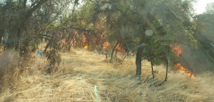 Declaran Alerta Roja en Pirque por incendio forestal
