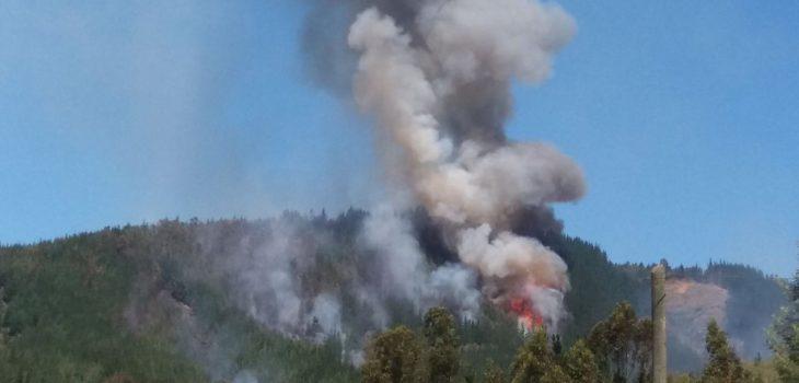 Tres brigadistas de Conaf mueren mientras combatían incendio forestal en el Maule