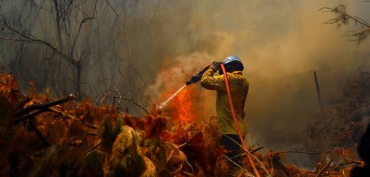 Tres casas destruidas y 11 damnificados deja incendio forestal en Pumanque