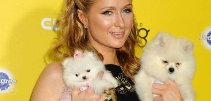 Paris Hilton Crea Instagram Para Mostrar La Lujosa Vida De Sus Mascotas Tv Y Espectáculo Biobiochile