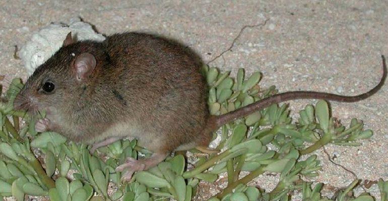 Estos 12 animales se extinguieron en 2016