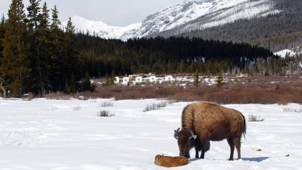 Adam Zier-Vogel | Parks Canadá