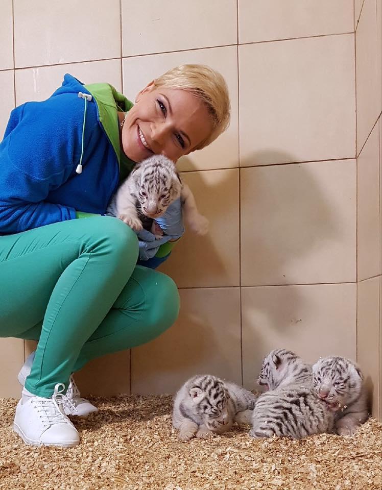 Zoológico polaco presenta raros cuatrillizos de tigre blanco