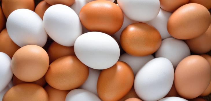 Resultado de imagen para ¿Son mejores los huevos blancos o los huevos de color?