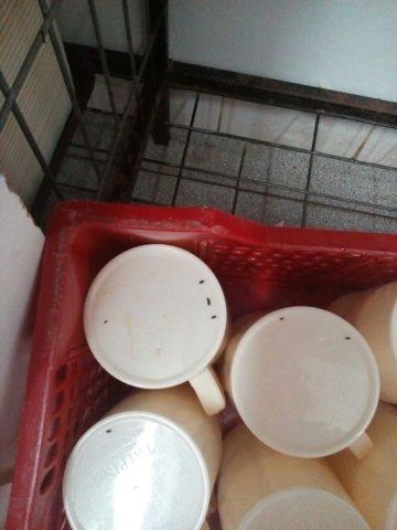 Tazones contaminados con heces de ratones | Pedro Cid (RBB)