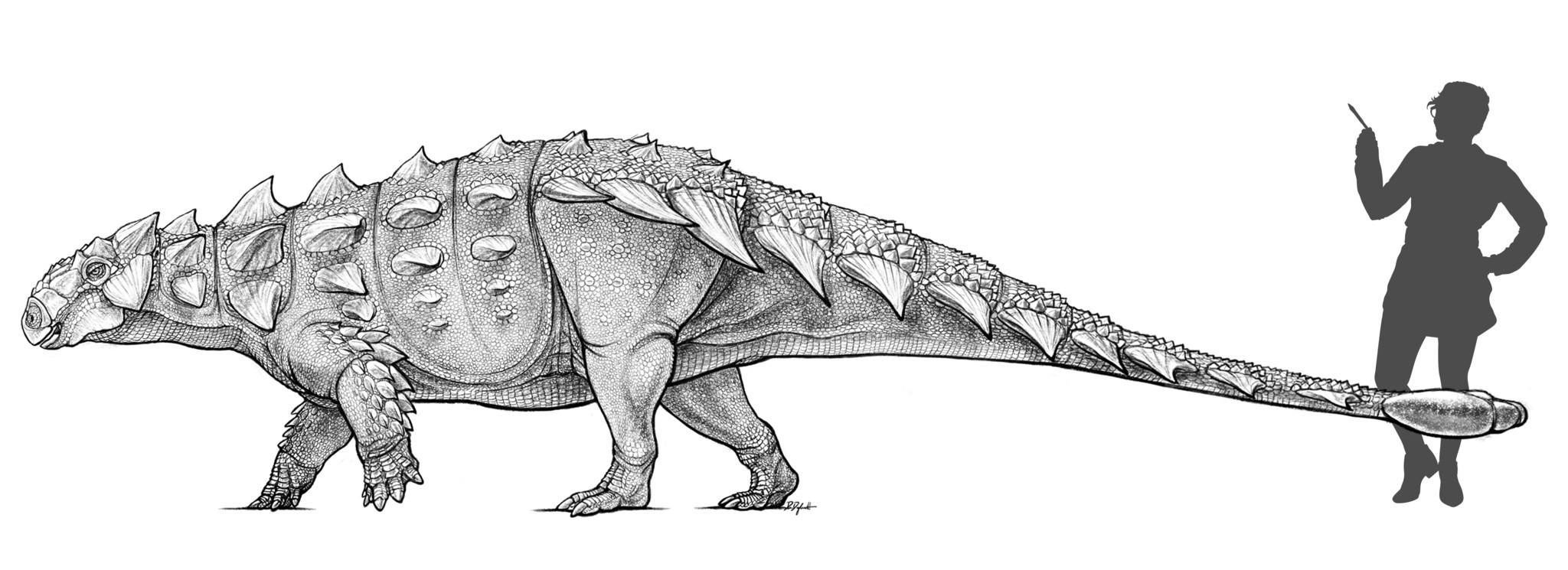 Comparación del dinosaurio con una persona | Latimes.com