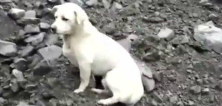 El emotivo video de un perro buscando a su amo entre los escombros del alud en China