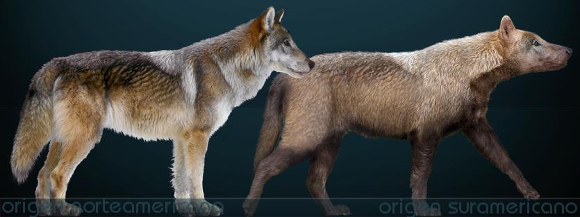 Posible aspecto de los lobos gigantes   Sergiodlarosa en Wikimedia Commons