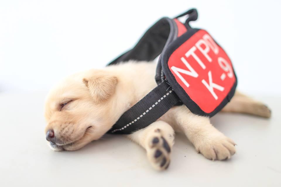 Nuevos perritos policía de Taiwán   NPA 署長室 en Facebook