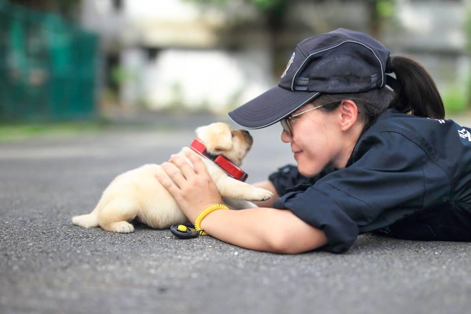 Perritos policía de Taiwan derriten a los malechores con pura ternura - Imagen 5
