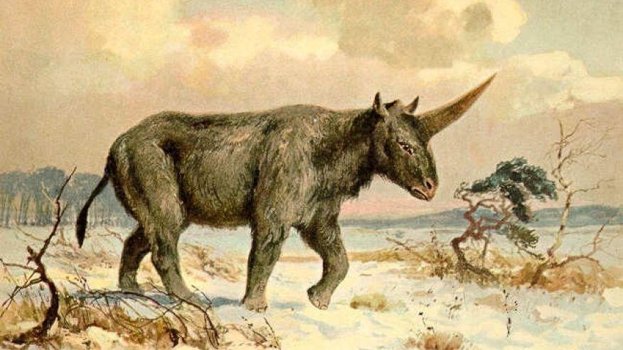 Unicornio gigante siberiano   Wikimedia Commons