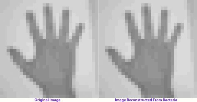 Imagen original (izquierda) e imagen reconstruida de la bacteria (derecha)