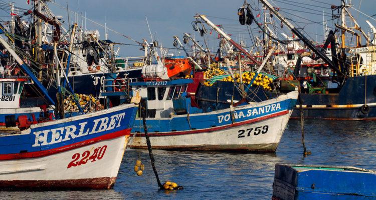 Pescadoras artesanales del Bío Bío crearán asociación: buscan incorporar sus demandas en una ley