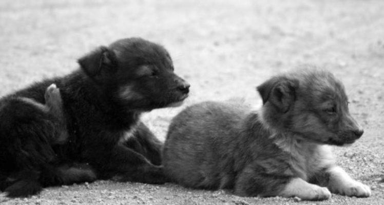 66% de vecinos de Temuco y Padre Las Casas encuentra preocupante la cantidad de perros callejeros