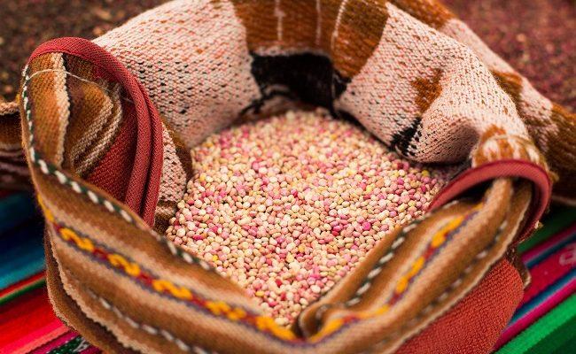 Congreso Mundial de Quinua reunirá en Chile a expertos para analizar el futuro del grano ancestral