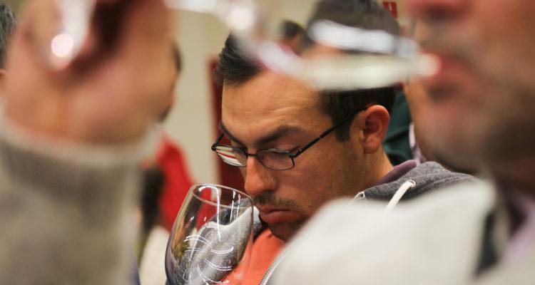 Premiadas viñas campesinas de O'Higgins participan en Fiesta de la Vendimia de Chepica