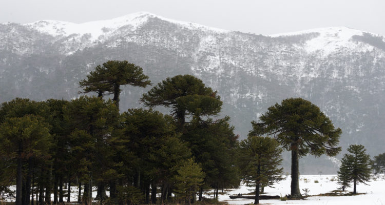 Unesco declara a Kütralcura como el primer geoparque de Chile: tiene 6 áreas protegidas y 5 volcanes