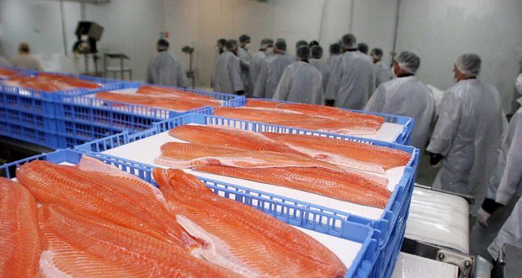 Gobierno reforzará fiscalización a industria del salmón tras lapidario informe sobre seguridad
