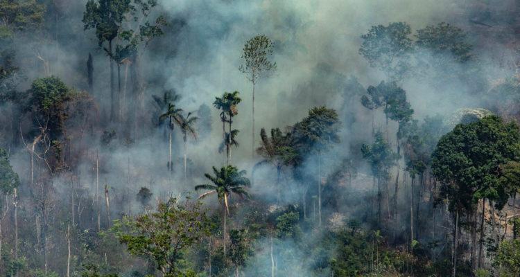 ¿Por qué arde una parte de la Amazonía y qué impacto tendrá en el cambio climático?