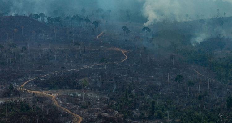 Greenpeace realiza sobrevuelo en el Amazonas y califica los incendios como