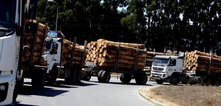 Transportistas forestales evalúan paro por