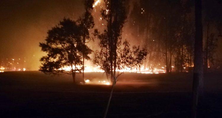 Bomberos trabajan para controlar incendio forestal en Fundo Las Tablas