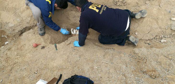 Encuentran cráneo de larga data en Viña del Mar: fue hallado por perro que escarbó en un jardín