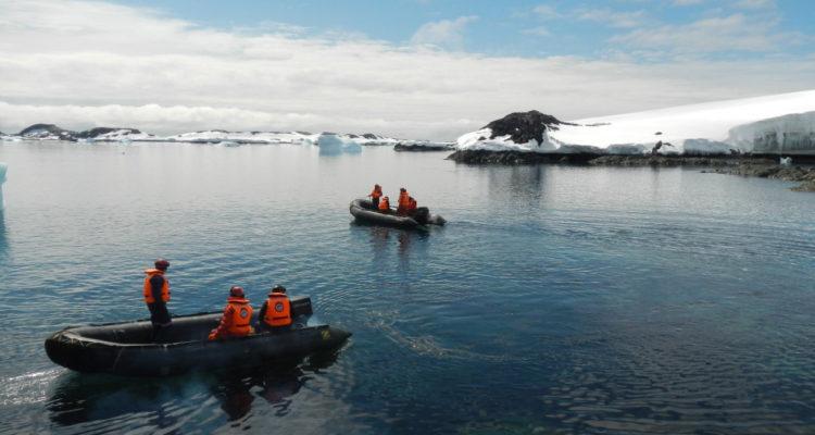 Hallazgo científico: detectan presencia de choritos en la Península Antártica