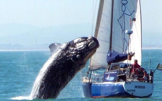 1Imagen | Capetown Sailing