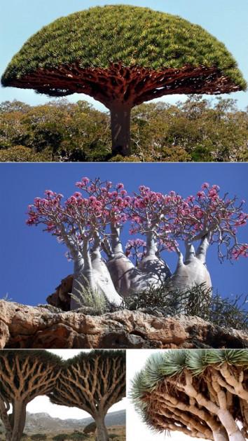 Socotra_Island