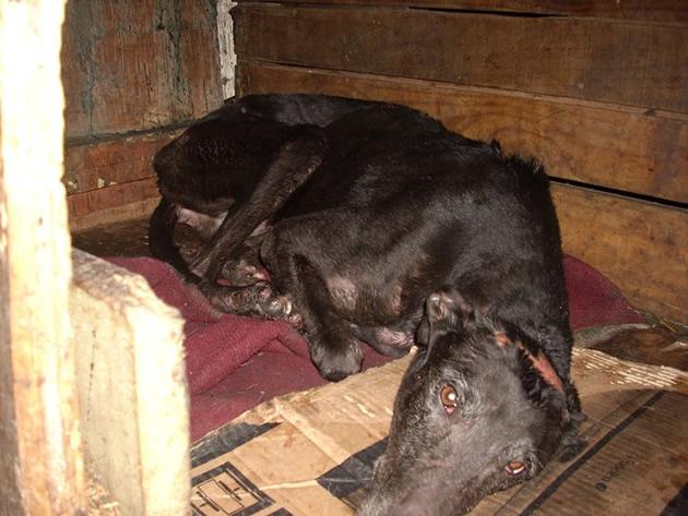 Perros tras ser rescatados del incendio | Adopciones Temuco