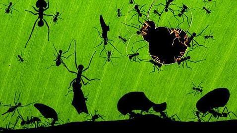 Una maravilla de hormigas   Bencé Maté