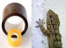 Cinta adhesiva y lagarto Gecko | Wikipedia