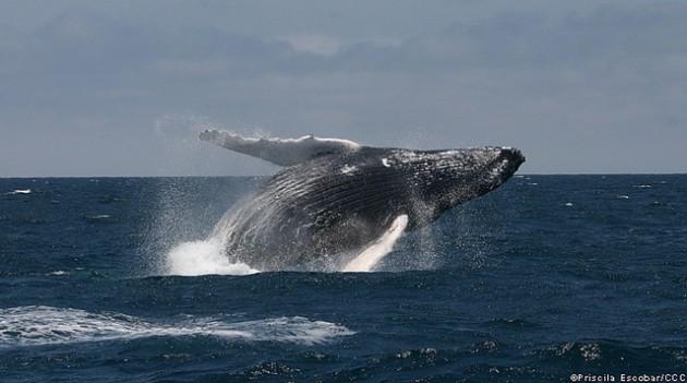 Priscila Escobar | Centro de Conservación Cetacea