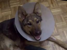 Uno de los perritos en adopción | ADLA