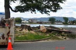 Tala de árboles en costanera de Valdivia