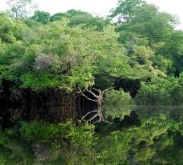 Amazonía | Wikipedia