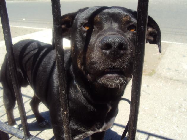 Perro abandonado / Gladys Sepulveda