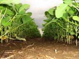 campos de soja en Argentina