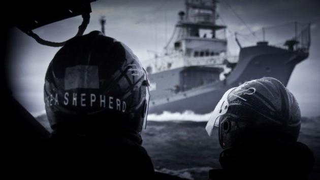 Sea Shepherd y Yushin Maru | Shea Shepherd