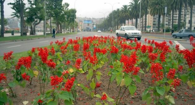 12.000 flores para Valparaíso