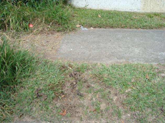 Vecinos del Cerro L aVirgen usan de letrina ante jardin de mi casa   Carolina Vera